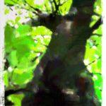 世界樹と呼ばれた樹(6/6)