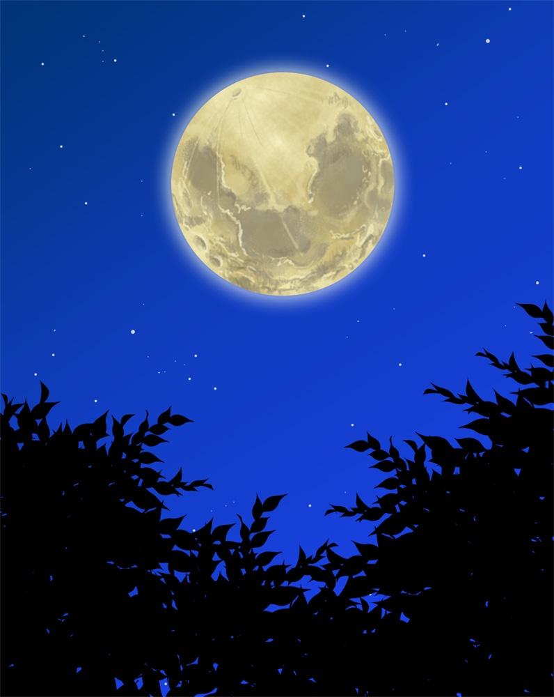 月夜のネコ4