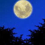 月夜のネコかいな(4/4)